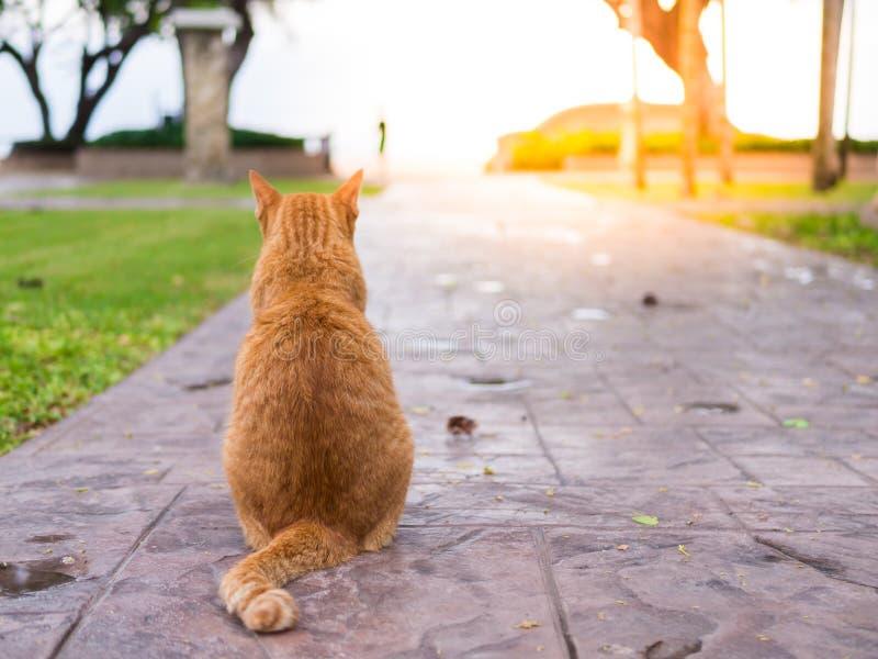 Katten väntar på ägaren arkivfoton