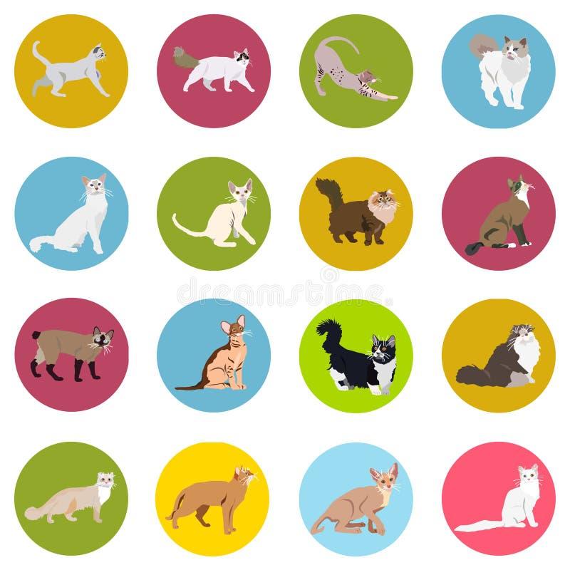 Katten van verschillende rassen pictogrammen Vectorbeeld in een vlakke stijl Illustratie op een ronde achtergrond Element van ont stock afbeeldingen