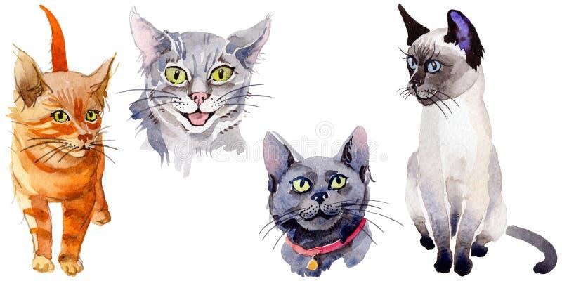 Katten wild dier in een geïsoleerde waterverfstijl stock illustratie