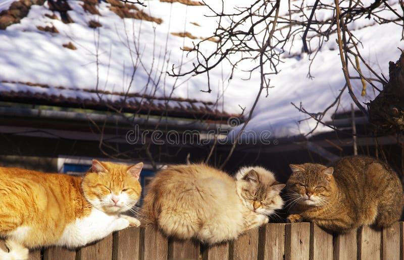 Katten in zon stock foto