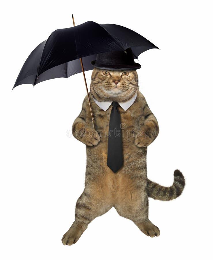 Kattendandy met paraplu royalty-vrije stock foto's