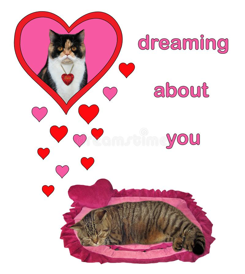 Kattendromen van zijn liefde 2 stock foto's