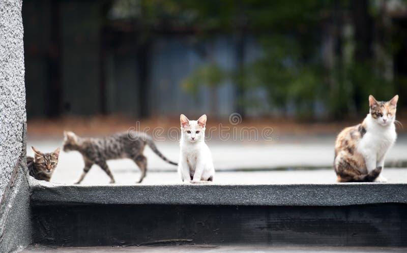 Kattenfamilie royalty-vrije stock foto