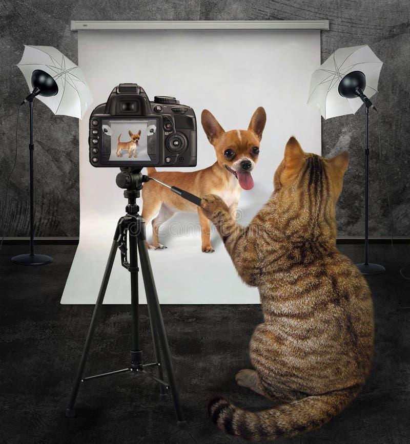 Kattenfotograaf in studio 3 stock afbeeldingen