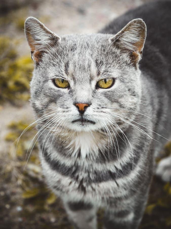 Kattengezicht stock foto