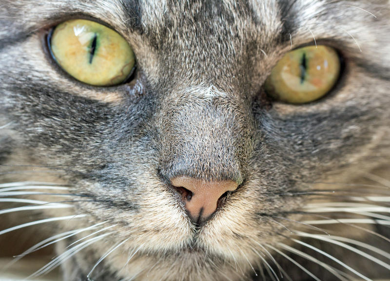 Kattengezicht royalty-vrije stock foto