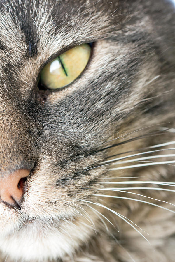 Kattengezicht stock afbeelding