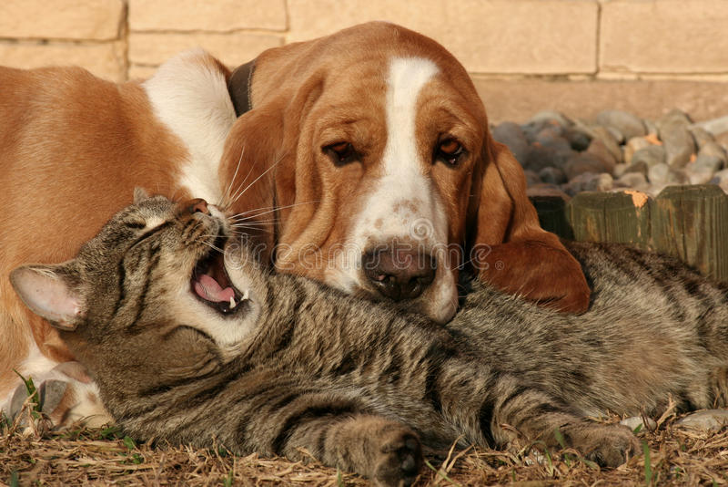 Kattenhoofdkussen, honddeken III stock afbeeldingen