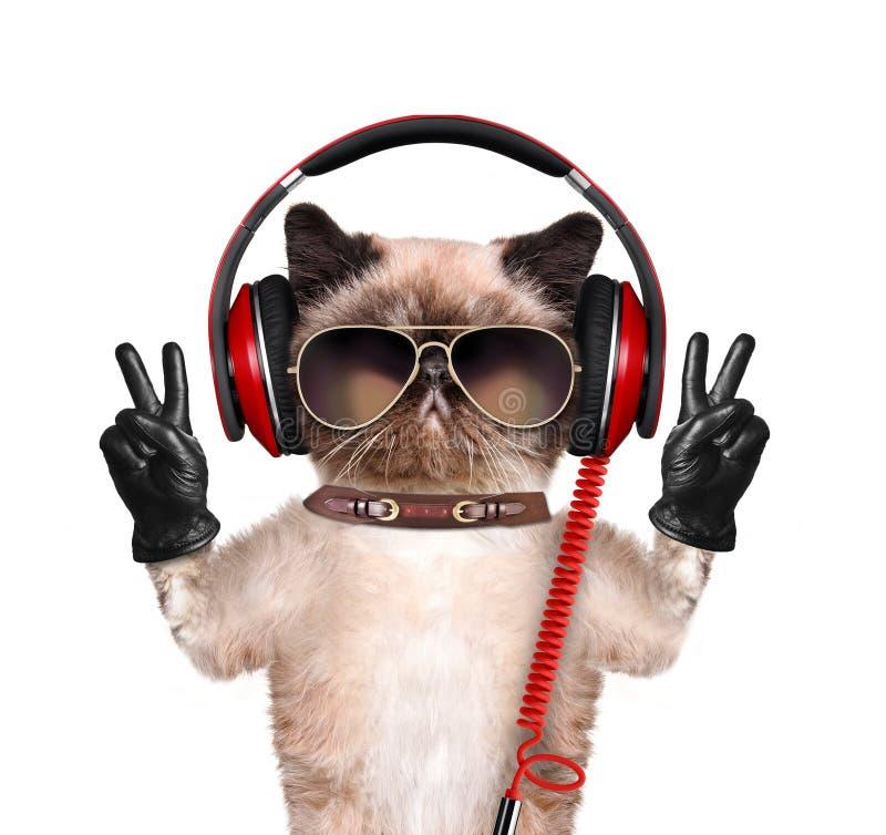 Kattenhoofdtelefoons royalty-vrije stock afbeeldingen