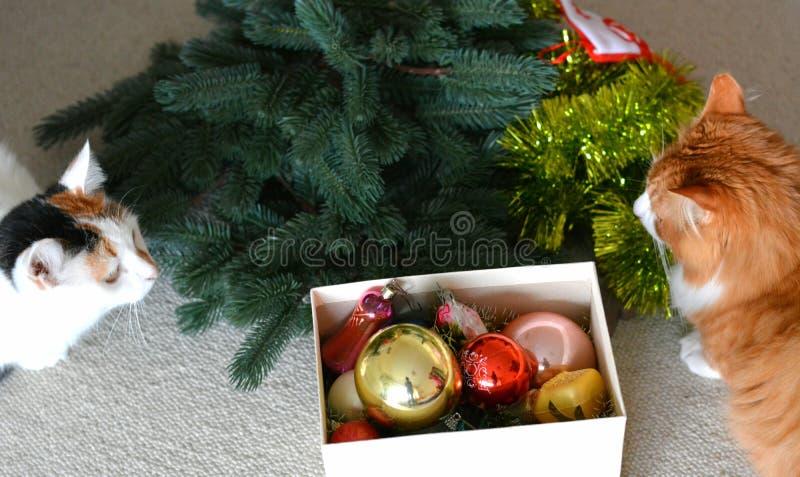 Kattenhuisdieren en Kerstmisdecor stock afbeelding