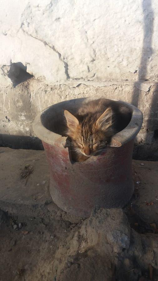 Kattenkatje met boos gezicht stock afbeelding