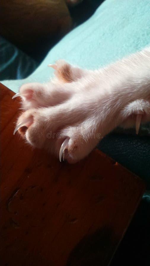 Kattenklauwen royalty-vrije stock afbeelding