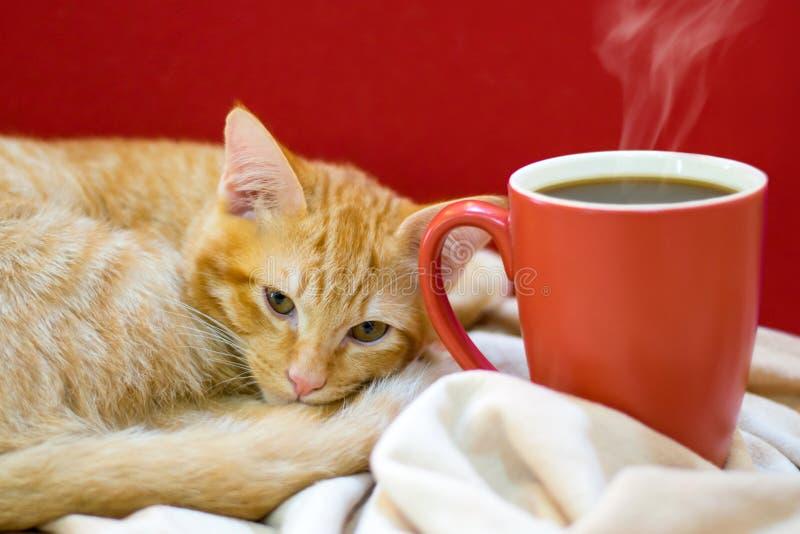 Kattenkoffie, een kat met een kop van koffie royalty-vrije stock afbeeldingen