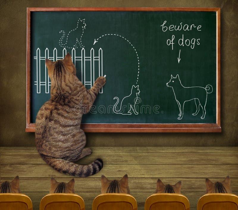 Kattenleraar en zijn leerlingen royalty-vrije stock afbeeldingen