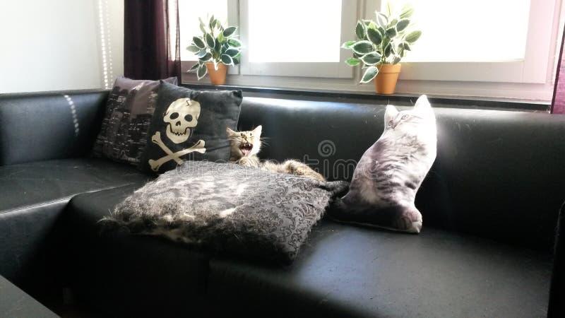 Kattenmiauwen royalty-vrije stock afbeelding