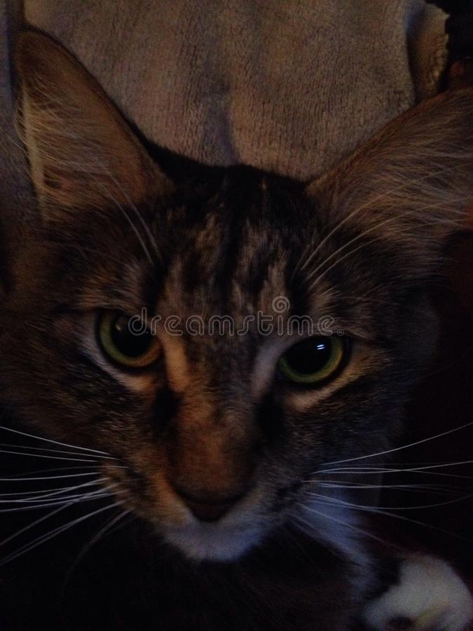 Kattenogen royalty-vrije stock foto's