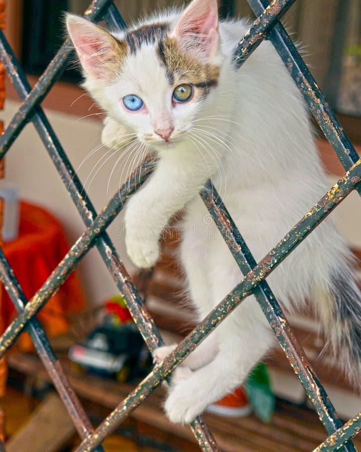 Kattenogen stock foto's