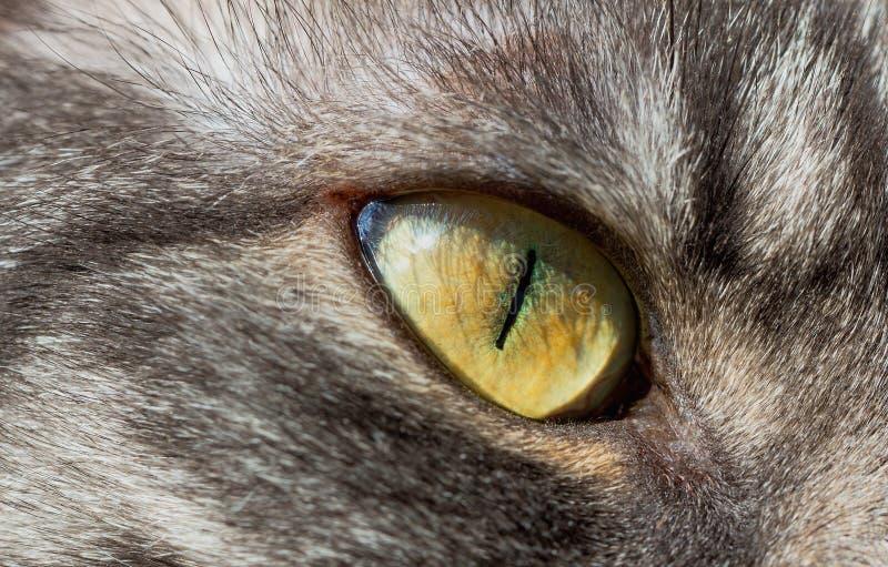 Kattenoog stock foto's