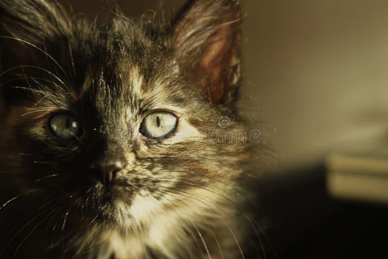 Kattenoog in de zon royalty-vrije stock afbeeldingen