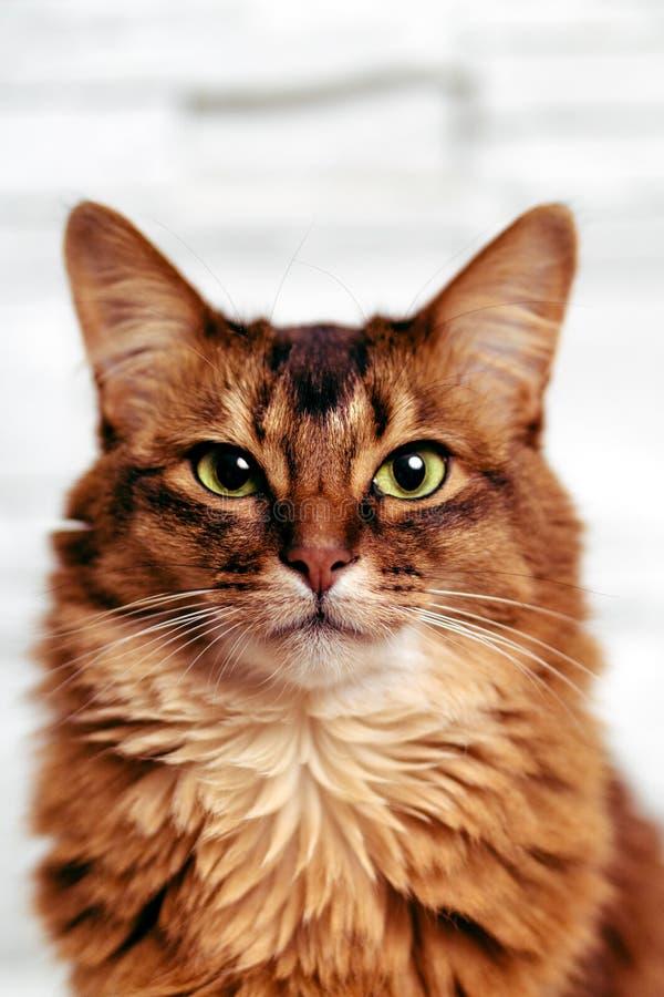 Kattenportret headshot stock afbeeldingen