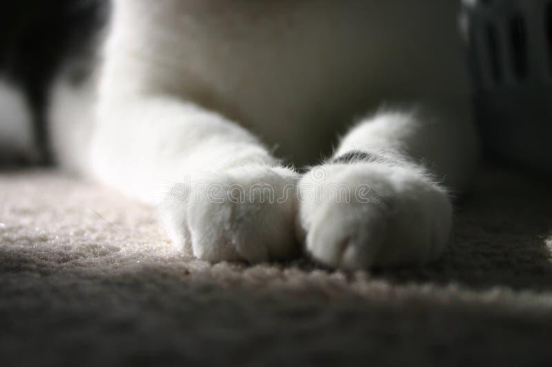 Kattenpoten stock foto's