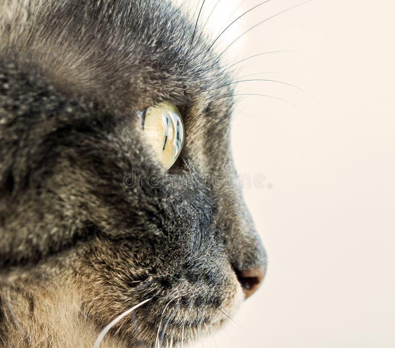 Kattenprofiel royalty-vrije stock fotografie