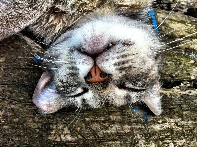 Kattenslaap stock foto's