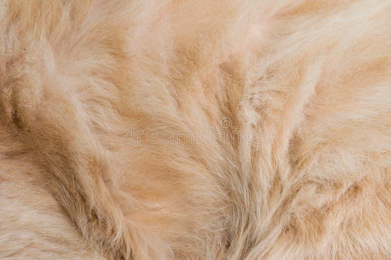 Kattenslaap in bed stock afbeeldingen