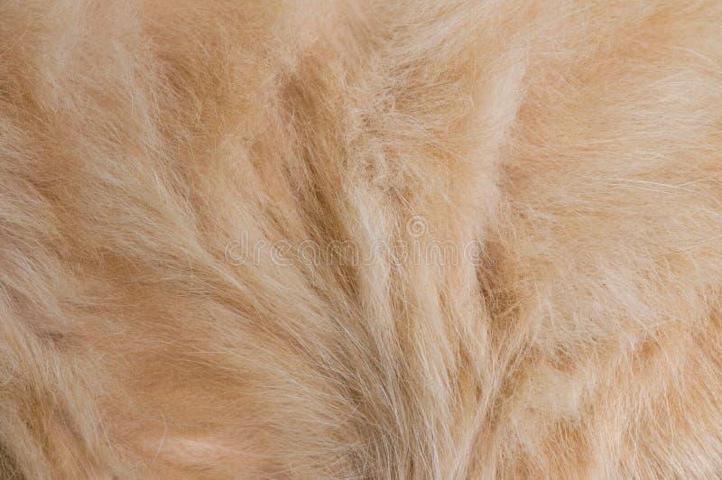 Kattenslaap in bed stock afbeelding