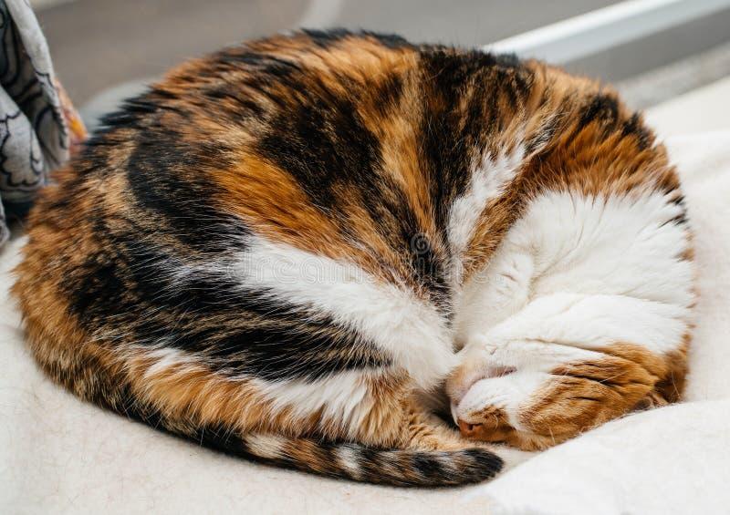 Kattenslaap dichtbij venster sterke katachtige dromen stock afbeeldingen