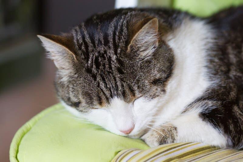 Kattenslaap in een groene kindzetel stock fotografie