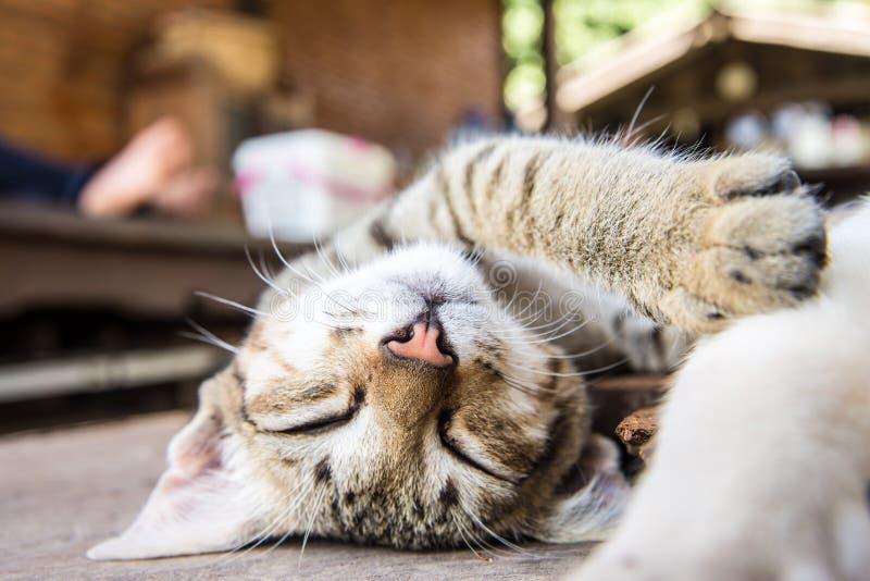 Kattenslaap op de houten grond stock foto