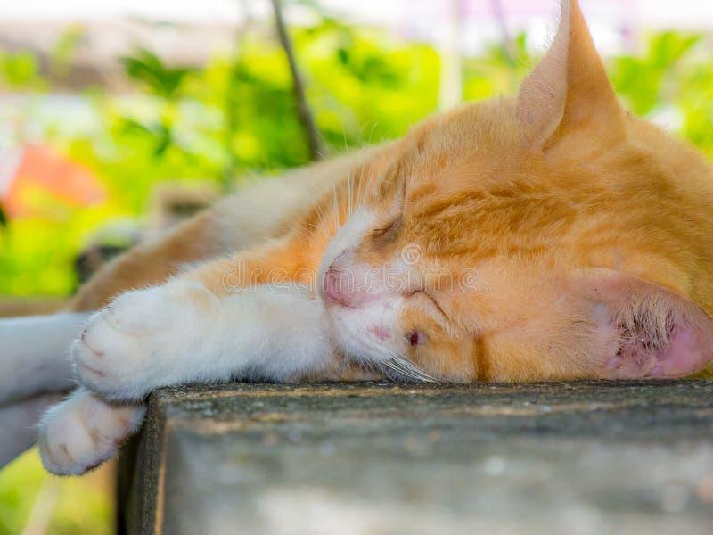 Kattenslaap op de muur stock fotografie