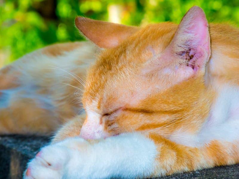 Kattenslaap op de muur royalty-vrije stock foto's