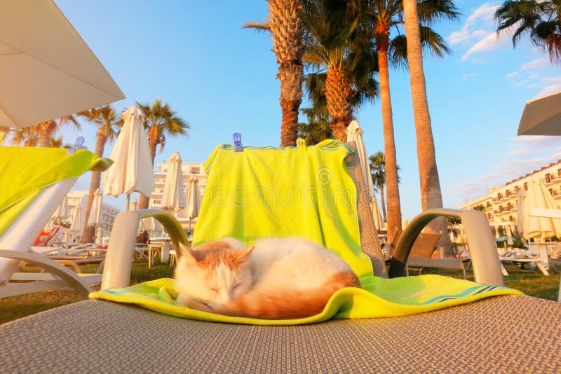 Kattenslaap op deckchair cyprus royalty-vrije stock afbeelding