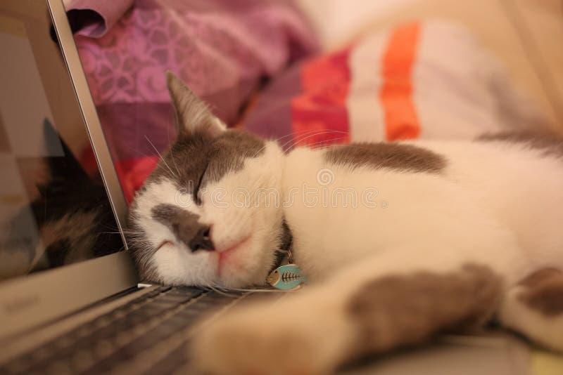 Kattenslaap op open laptop stock afbeelding