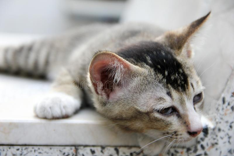 Kattenslaap op stoel royalty-vrije stock foto's