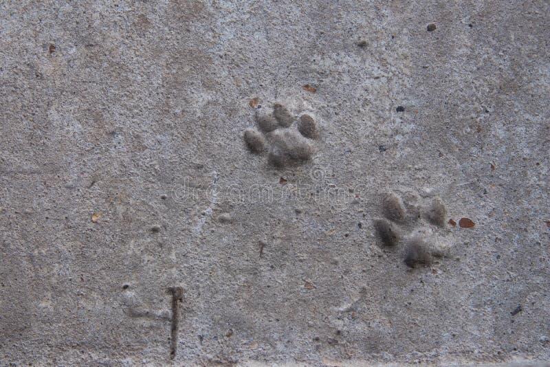 Kattenvoetafdruk op beton stock foto's