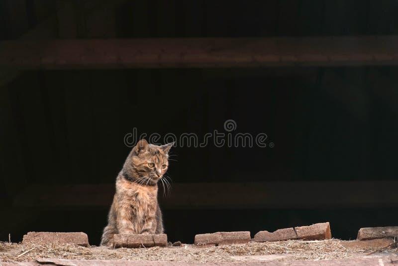 Kattenzitting in de zolder in hayloft royalty-vrije stock foto's