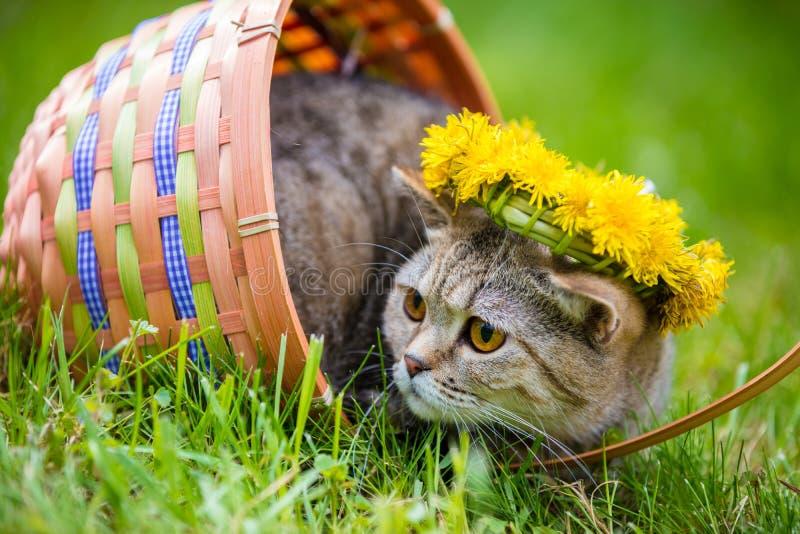 Kattenzitting in een mand op het gras royalty-vrije stock afbeelding