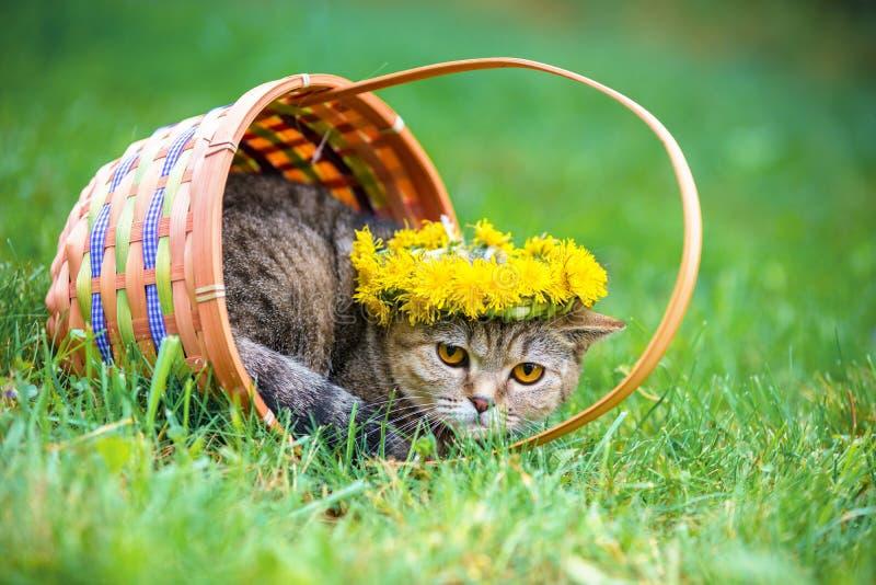 Kattenzitting in een mand op het gras royalty-vrije stock afbeeldingen