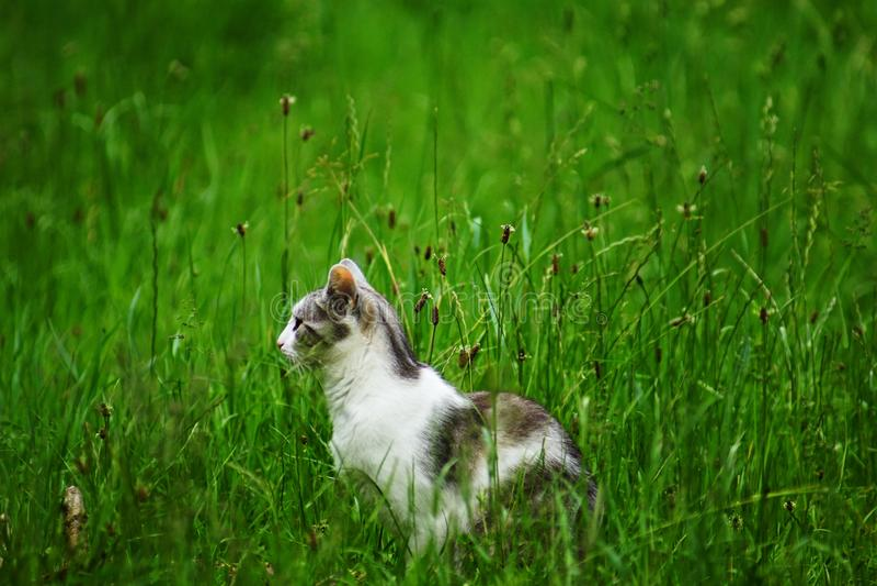 Kattenzitting in het gras stock foto's