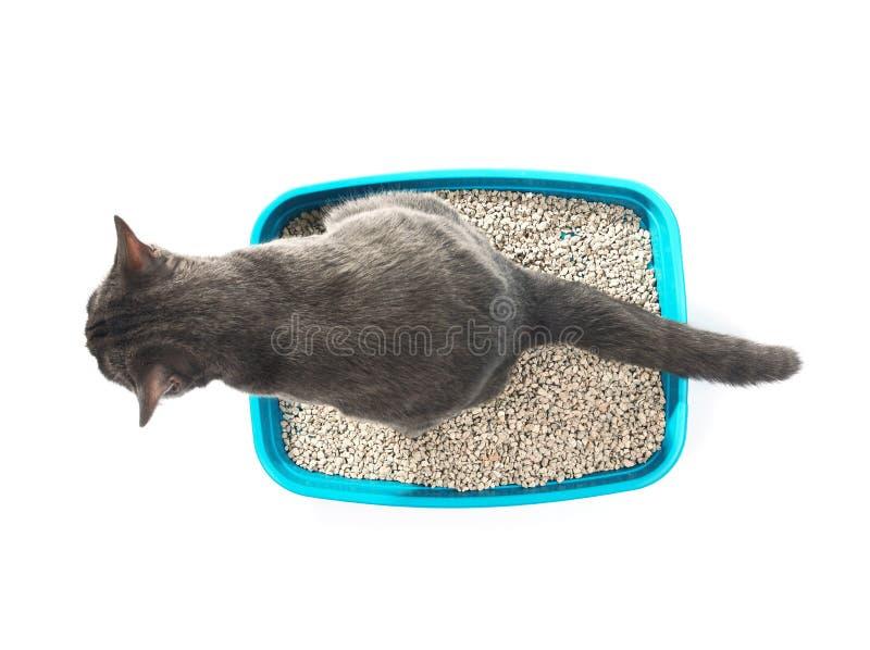 Kattenzitting in huisdierentoilet op witte achtergrond, royalty-vrije stock foto's