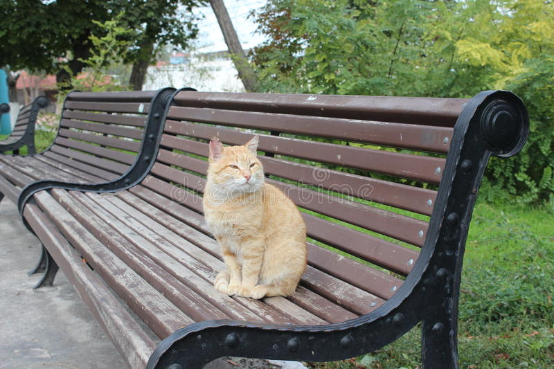 Kattenzitting op bank stock afbeelding