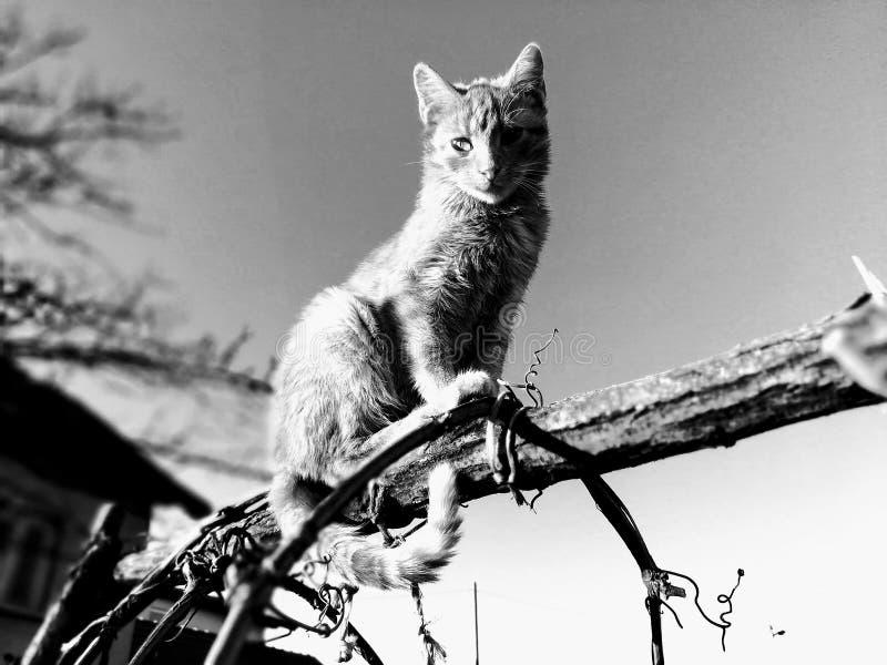 Kattenzitting op de boom! royalty-vrije stock foto's