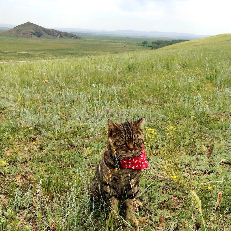 Kattenzitting op de prairies stock foto