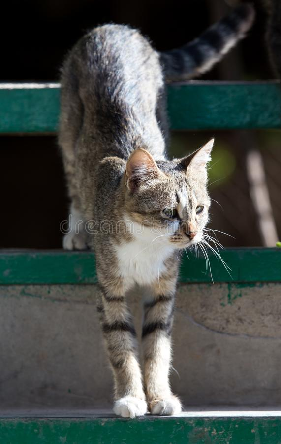 Kattenzitting op een portiek stock fotografie