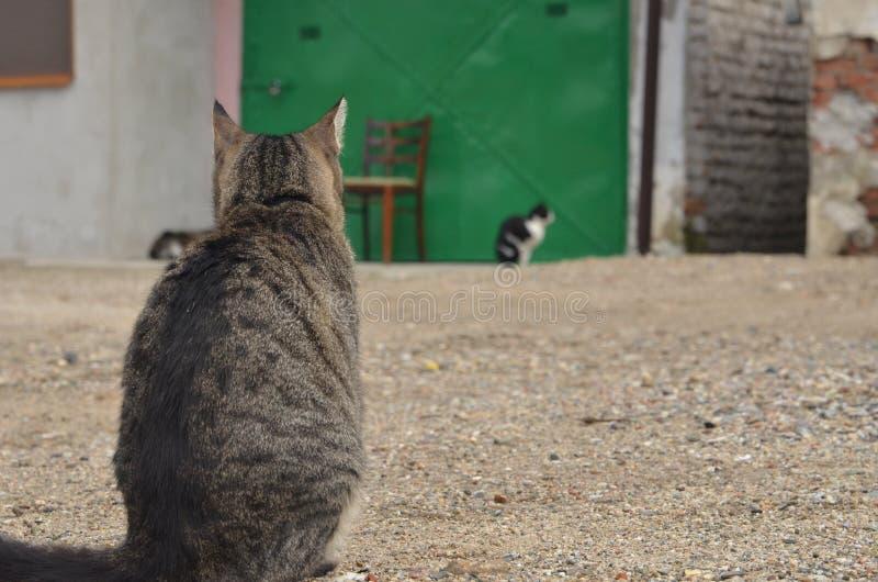 Kattenzitting op grond royalty-vrije stock foto