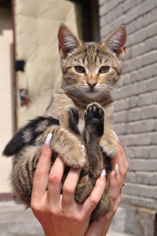 Kattenzitting op handen stock foto