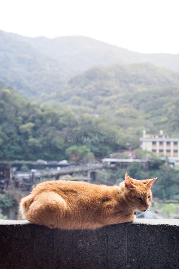 Kattenzitting op muur met de achtergrond van de bergscène stock fotografie